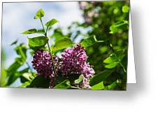 Violet Lilacs And A Bee Greeting Card