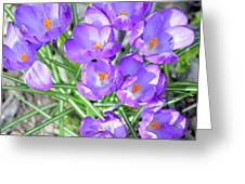 Violet Lilies Greeting Card