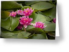 Violet Lillies Greeting Card