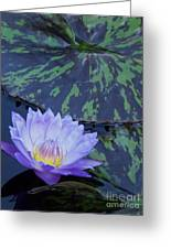 Violet Lily Greeting Card