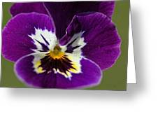 Violet Macro Greeting Card