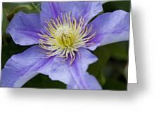Violet Morning Greeting Card