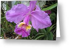 Violet Orchid Greeting Card