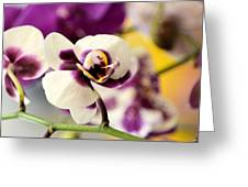 Violet Orchids Brushed With Gold Greeting Card