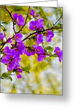 Violet Quince Greeting Card