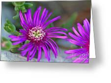 Violet Spring Iv Greeting Card