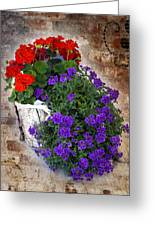 Violets And Geraniums On The Bricks Greeting Card