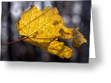 Virgin Gold - Featured 3 Greeting Card