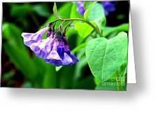 Virginia Bluebell Greeting Card