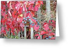 Virginia Creeper Fall Leaves And Berries Greeting Card