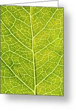 Virginia Creeper Leaf Greeting Card