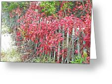 Virginia Creeper Vine On Dune Fence - Fall Colors Greeting Card