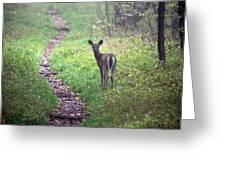 Virginia - Shenandoah National Park - White Tailed Deer Greeting Card