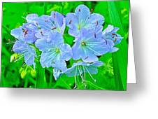 Virginia Waterleaf Near Alamo-michigan Greeting Card
