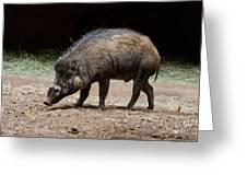 Visayan Warty Pig Greeting Card