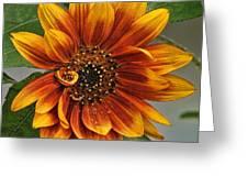 Visions Of Summer Greeting Card