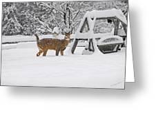 Visiting Winter Buck Greeting Card