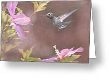 Visitor In The Rose Of Sharon Greeting Card