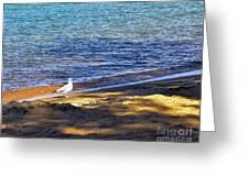 Visitor - Lake Tahoe Greeting Card