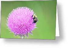 Visitor On Thistle Greeting Card