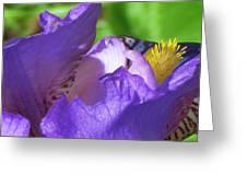 Visual Song Greeting Card