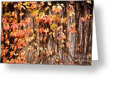 Vitaceae Family Ivy Wall Abstract Greeting Card