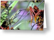 Vitality Of A Hummingbird Greeting Card