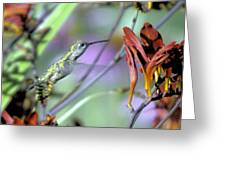 Vitality Of A Hummingbird Greeting Card