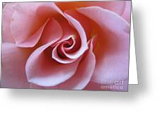 Vivacious Pink Rose 3 Greeting Card
