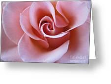 Vivacious Pink Rose 4 Greeting Card