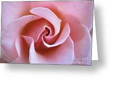 Vivacious Pink Rose 5 Greeting Card
