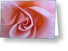 Vivacious Pink Rose Greeting Card
