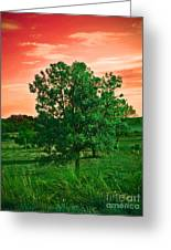 Vivid Blood Red Sky Greeting Card