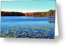 Vivid Fall Colors Greeting Card