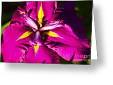 Vivid Iris Greeting Card