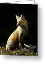 Vixen Fox   #4251 Greeting Card