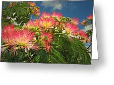 Voluntary Mimosa Tree Greeting Card