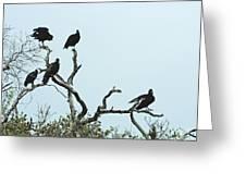 Vulture Club Greeting Card