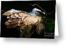 Vulture Resting In The Sun Greeting Card