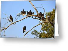 Vulture Tree Full Of Buzzards Greeting Card