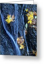 Wachlella Falls Detail Columbia River Gorge Greeting Card