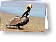 Wadding Pelican  Greeting Card