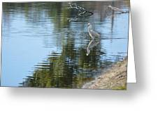 Wading Bird Greeting Card