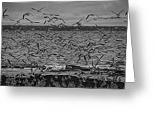 Wading Birds-black And White Greeting Card