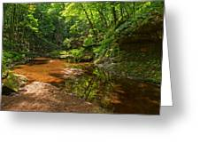 Wading In The Creek Greeting Card