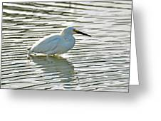Wading Snowy Egret Greeting Card