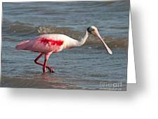 Wading Spoonbill Greeting Card