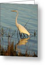 Wading The Pond Greeting Card
