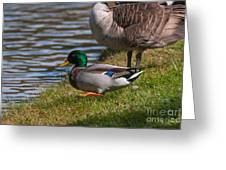 Wadlding To The Water Greeting Card