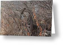 Wagon Wheel_7449 Greeting Card